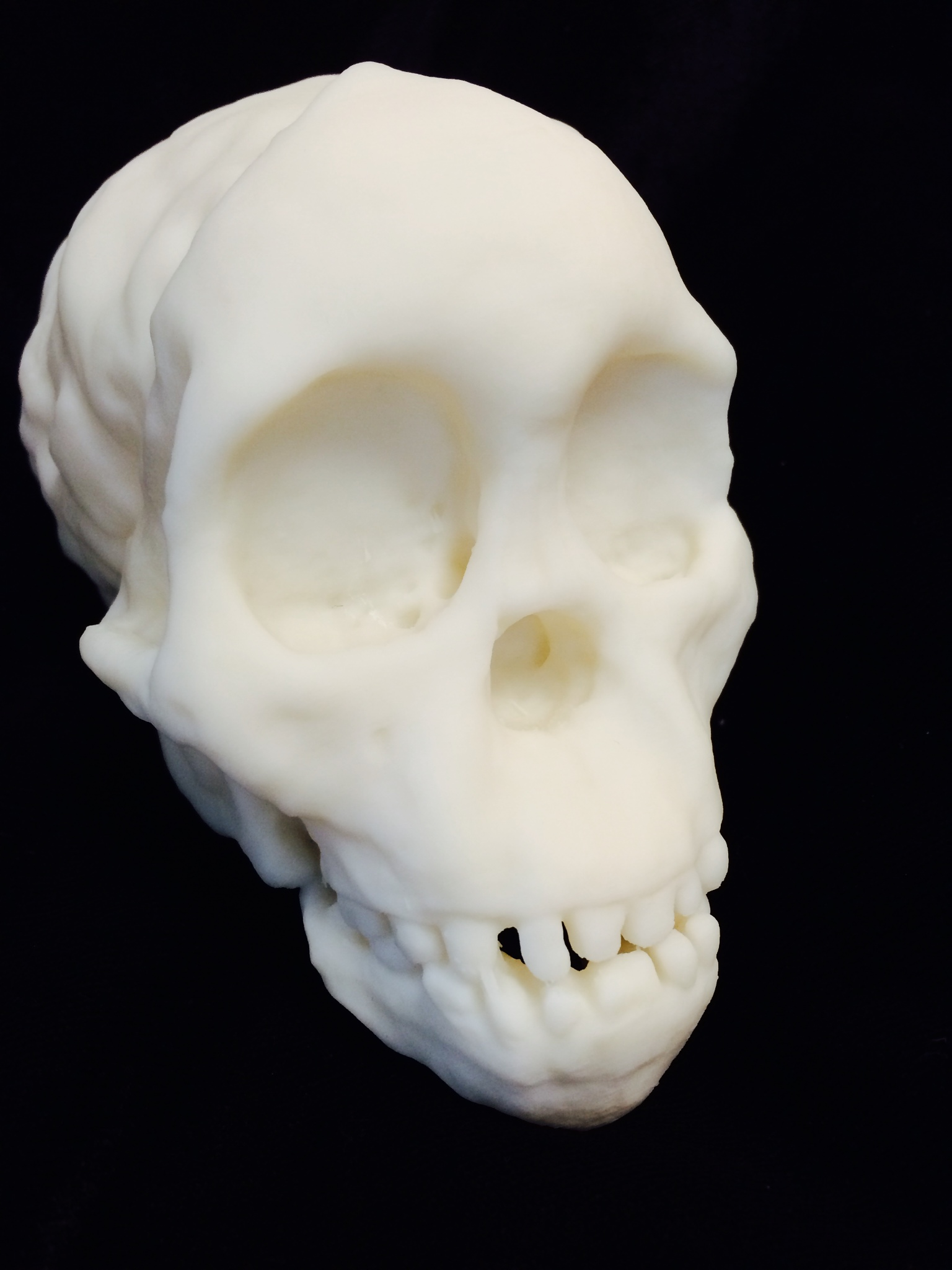 Taung Child Skull 3D Printed